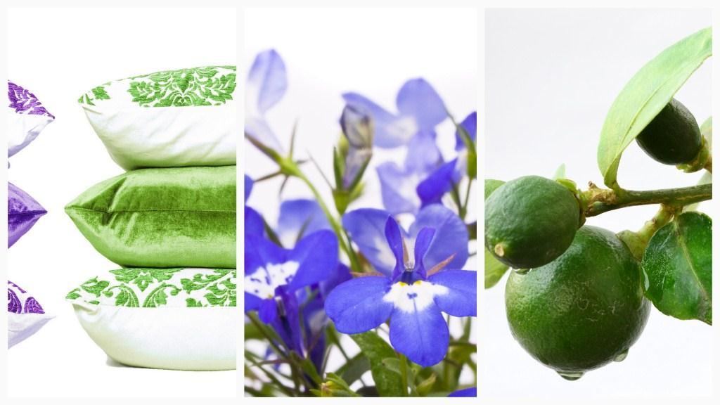 lime green and purple lobelia